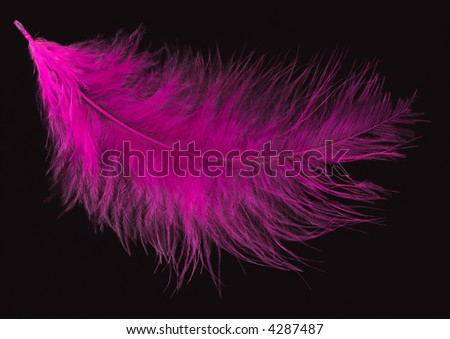 Colored Feather isolated on black background