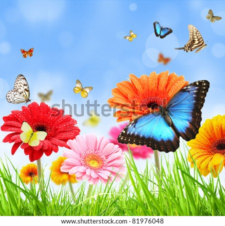 colored gerber flowers with exotic butterflies