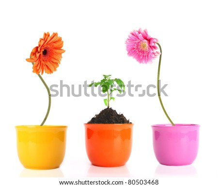 Colored gerber flowers with small green plant