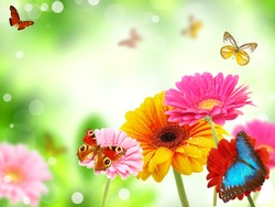 colored gerberas flowers with exotic butterflies