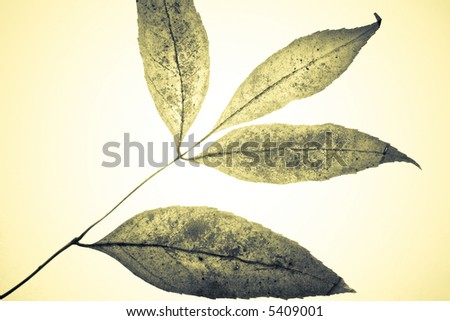 Colored grungy mistical leaves. Studio shot with light spot in center