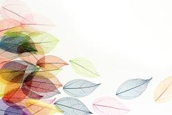 colored leaf skeletons on white background