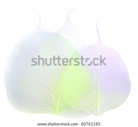 colored leaves - stock photo
