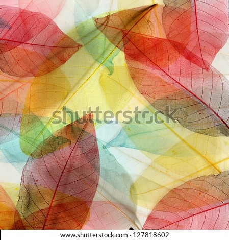 colored leaves background