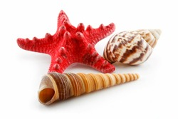 Colored Seashells (Starfish and Scallop) Isolated on White Background