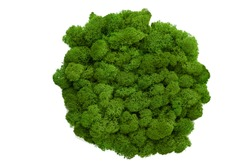 colored stabilized moss for decoration. isolate