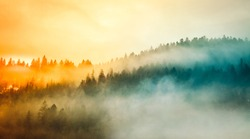 Colored sunrise in forested mountain slope with fog
