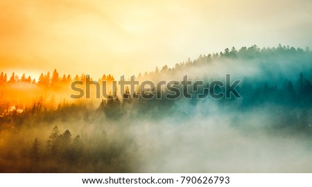 Stock Photo Colored sunrise in forested mountain slope with fog