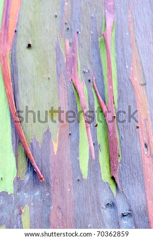 colorful abstract pattern of rainbow eucalyptus tree bark