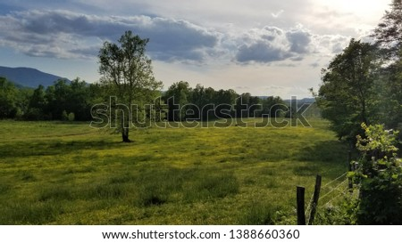 Landscape Green Grass Field Blue Sky Clouds Two Trees