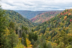 Colorful Allegheny mountains in autumn fall with multicolored red and yellow foliage at Lindy Point overlook in Blackwater Falls State Park in West Virginia, USA