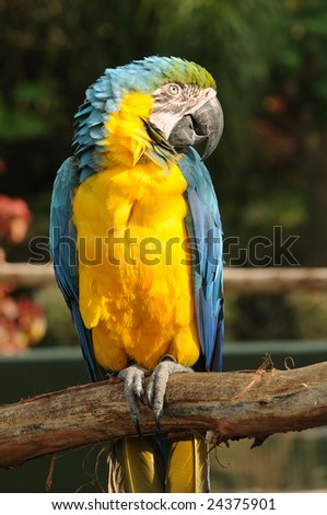 Colorful Amazon parrot closeup view