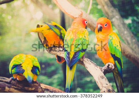 Stock Photo Colorful amazon parrot stand on the tree. Portrait of  amazon's parrot or colorful parrot is looking for other parrots.