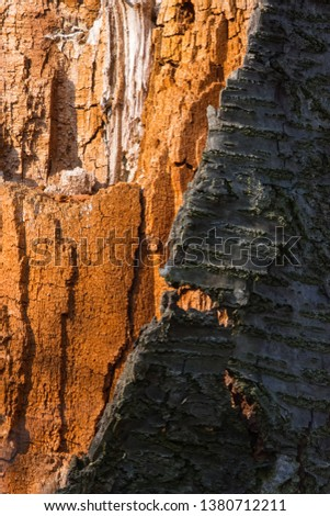 Colorful and contrasty dead tree bark #1380712211