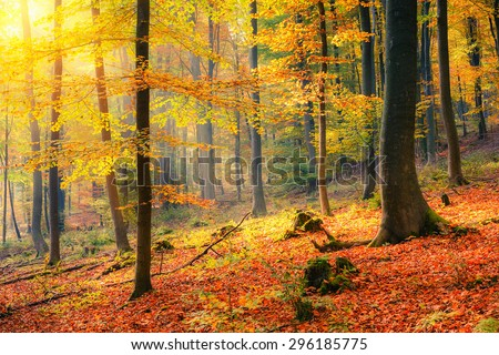 Stock Photo Colorful and foggy autumn forest
