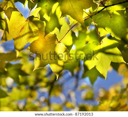 Colorful and fresh leaves