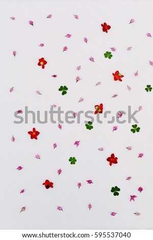 Colorful and texture of flower and leaf on white background. Beautiful of nature. Wallpaper art.