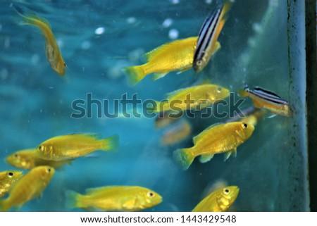 Colorful  aquarium fishes  in the aquarium #1443429548