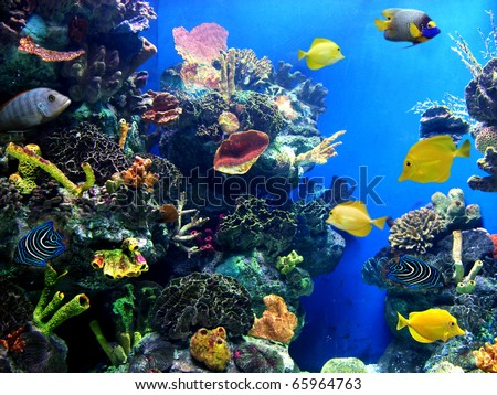Colorful aquarium, showing different colorful fishes swimming