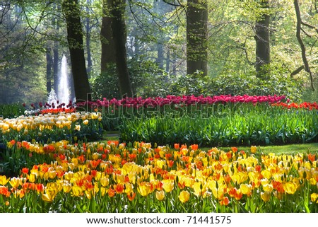 Colorful arrangement of tulips on sunny morning in spring