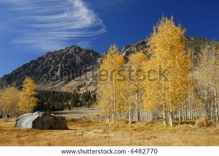 Colorful aspen trees in a valley in Eastern Sierra Nevada