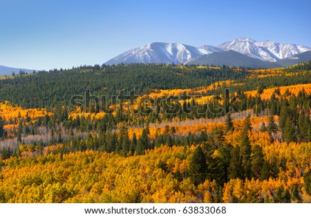 Colorful Aspens in rocky mountains of Colorado
