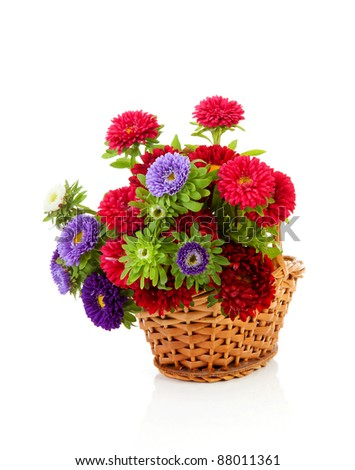 colorful Asters flowers in cane basket over white background
