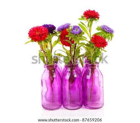 colorful Asters flowers in vase over white background