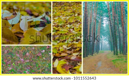colorful autumn collage - Shutterstock ID 1011552643
