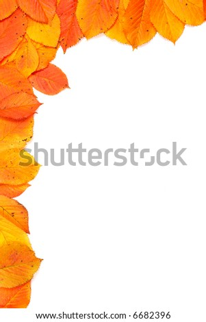 Colorful autumn corner made from leaves on white background