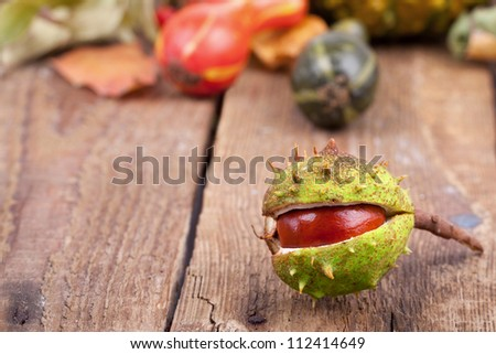 colorful autumn decoration on wooden table, in foreground a busted chestnut