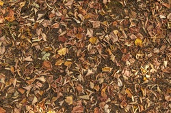 Colorful autumn fallen leaves on brown forest soil background