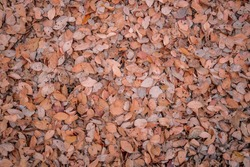 Colorful autumn fallen leaves on brown forest soil background, leaves on the ground from above.