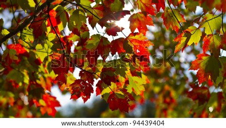 Colorful autumn foliage scenery