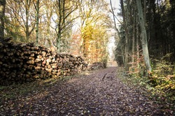 colorful autumn forest - sun beams - felled tree trunks, wood stacks