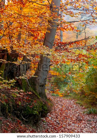 Colorful autumn forest with path