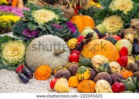 Colorful autumn harvest on the ground as a background #222345625