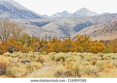 Colorful autumn in Sierra Nevada, California