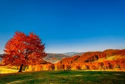 Colorful autumn landscape. Carpathian mountains, Ukraine, Europe.