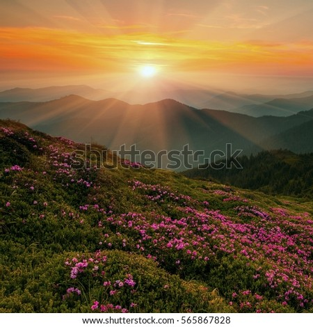colorful autumn landscape in the mountains - Shutterstock ID 565867828