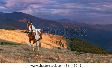 Colorful autumn landscape in the mountains with horse. Sunrise