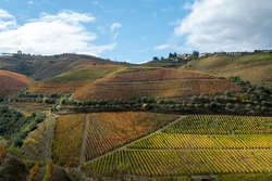 Colorful autumn landscape of oldest wine region in world Douro valley in Portugal, different varietes of grape vines growing on terraced vineyards, production of red, white, ruby and tawny port wine.