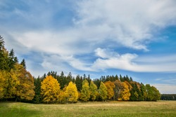 Colorful autumn landscape on a bright sunny day, blue sky, white cirrostratus clouds, yellow, red, orange and green birch trees and spruces on horizon, dry yellow and fresh grass on meadow