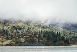 Colorful autumn landscape with mountain lake and coniferous forest with hoarfrost on trees on mossy hillside under low clouds. Scenic view to beautiful yellow larches with frost on hill among clouds.