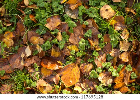 Colorful autumn leafs on a grass