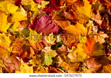 Colorful autumn leaves #147617975