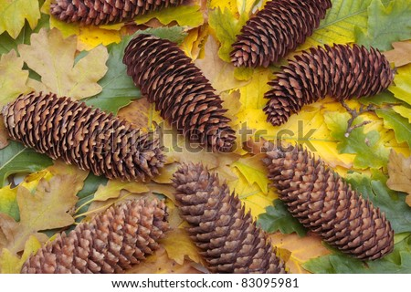 Colorful autumn leaves and pinecones