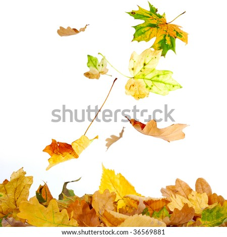 Colorful autumn leaves falling to the ground