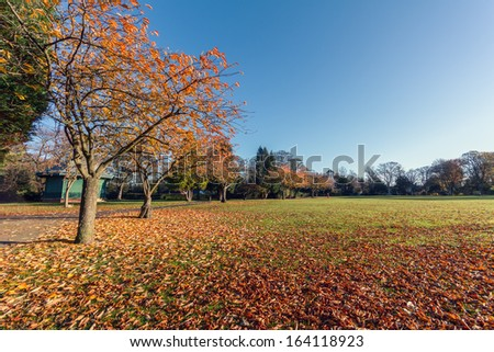 Colorful Autumn Leaves in a Park