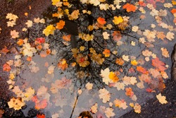 Colorful autumn leaves in a rain puddle